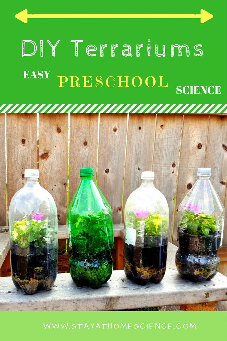 Make A Tabletop Garden Soda Bottle Terrarium Stay At Home Science