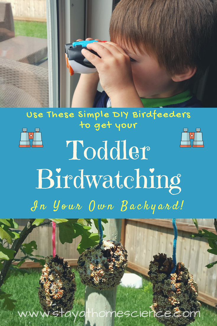 Toddler Birdwatching