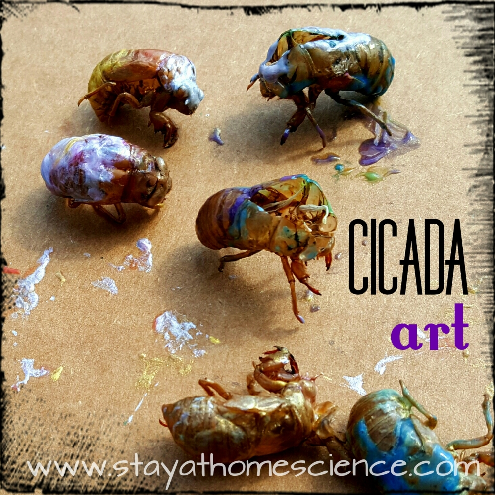 Exploring Cicadas A Preschool Steam Project Stay At